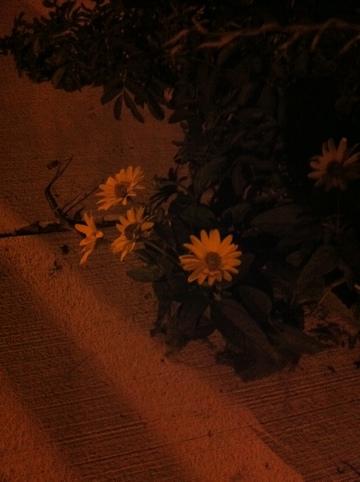 20110813-120024.jpg